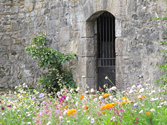 Image of Hidden Gardens of the Royal Mile