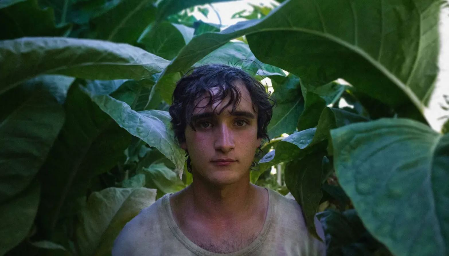 Image of Happy as Lazzaro